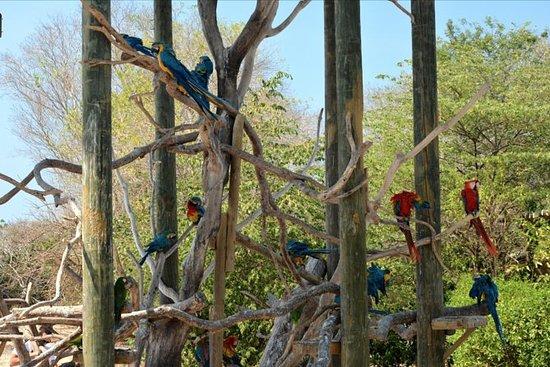 カルタヘナからのナショナル・アヴィアリーでの野鳥観察