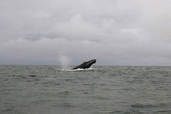Whale watching (Avistamiento de...