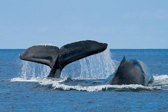 The 10 Best San Diego Boat Tours Amp Water Sports Tripadvisor