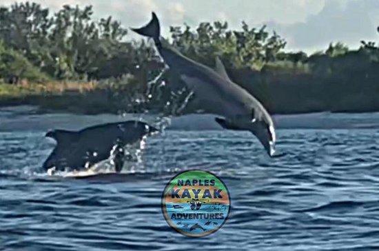 Sunset Dolphin Eco Kayak Adventure...