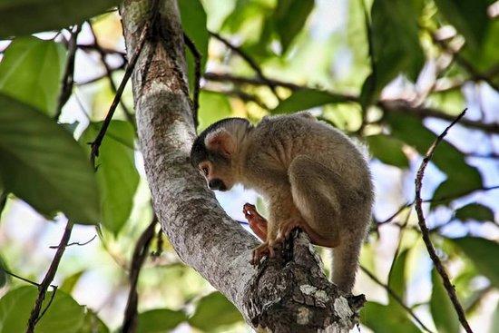 3 giorni 2 notti - Tambopata Jungle