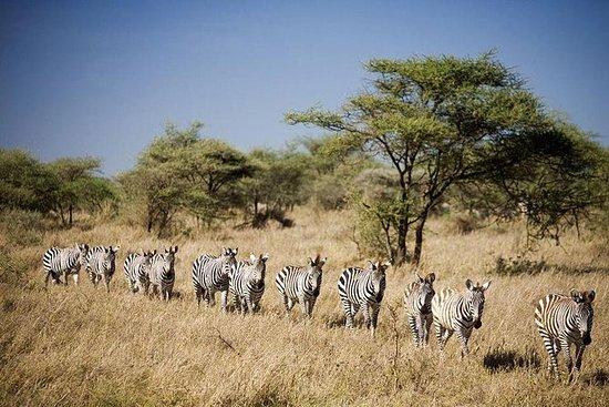 为期3天的塞卢斯游戏保护非洲丛林