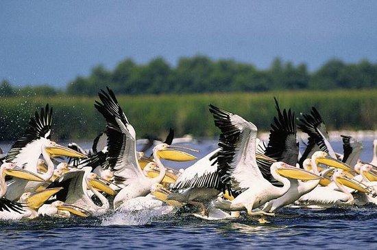 Danubio Birdwaching y Safari...
