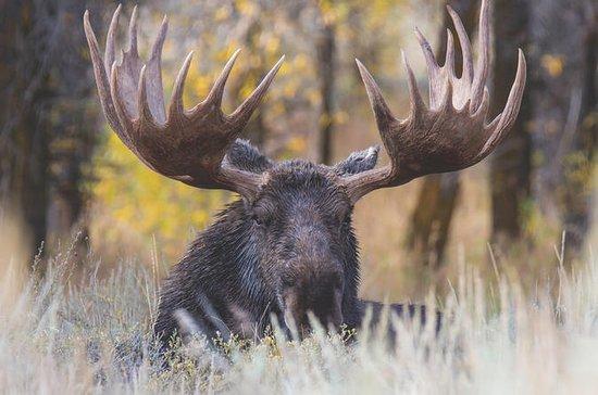 Full-Day Grand Teton Wildlife Safari...