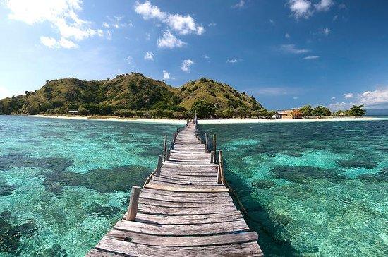 Exploradores de las Cinco Islas con...