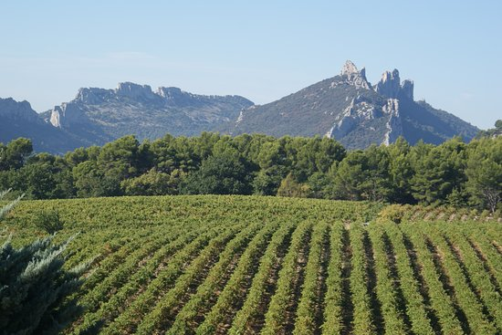 Os vinhedos da França são excepcionais! Esse da foto fica em Montmirail.    https://naprovence.com/2011/02/degustacao-de-vinhos-com-o-savoir-faire-frances/