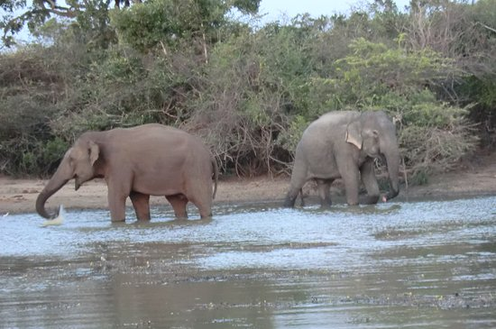 Mowgli Safari