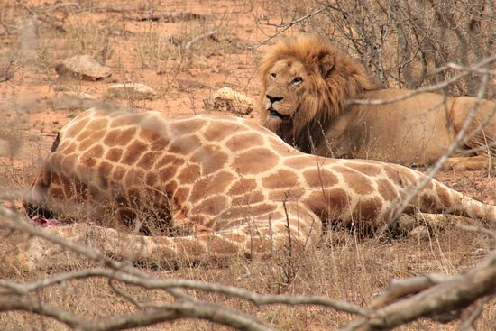 Foto de Kurt Safari - Day Tours