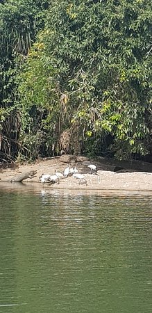 Ranganathittu Bird Sanctuary Photo