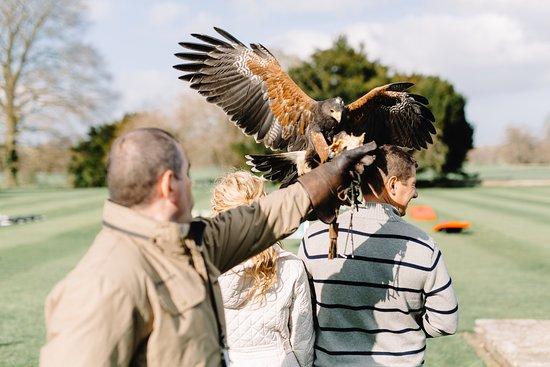 Dublin Falconry