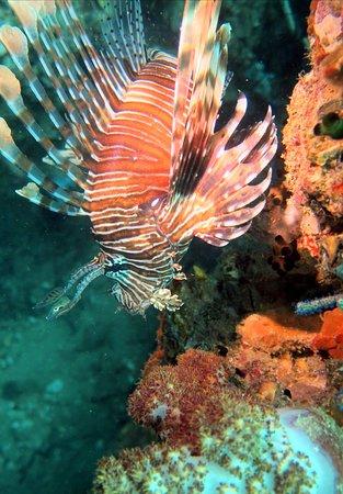Tolle Tage mit Super Diver Sabine
