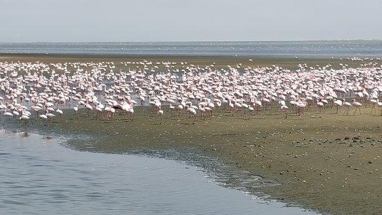 Namibia: Beautiful beach
