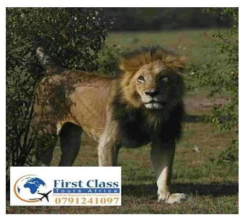 first class tour africa