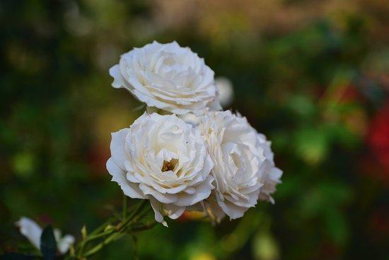 Hygienic Treatment Center Rose Garden