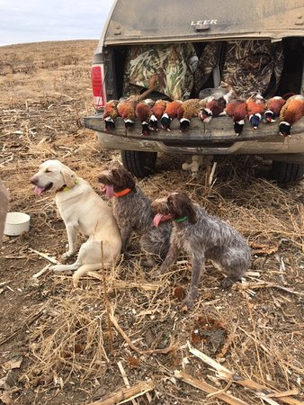 Gettysburg, Dakota del Sur: You'll get you limit on birds along with an unlimited adventure in hunting!