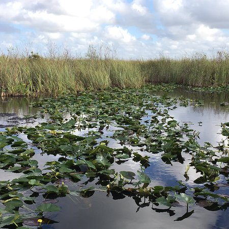 Everglades National Park Foto