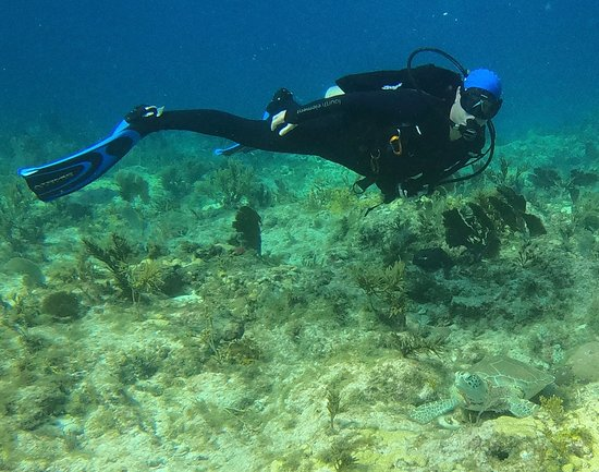 Rainbow Reef Dive Center: Turtle on Molasses reef.