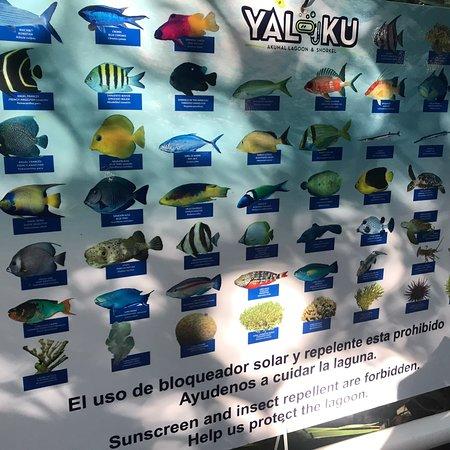 Yal-ku Lagoon-bild