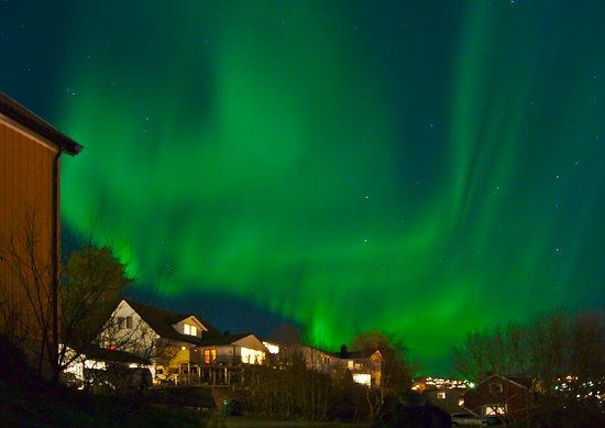 Central Norway, Norway: Nordlicht immer wieder ein faszinierendes Erlebnis! Und wenn man es dann noch im Vorgarten hat, perfekt.November 2018 Stjørdal, Norwegen