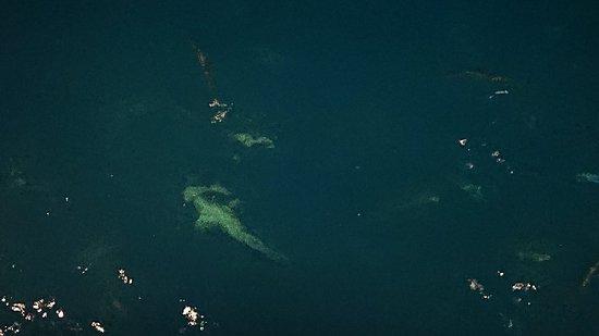 Övernattning på The Great Barrier Reef, snorkling, dykning och shark-feeding. Shark - feeding en häftig upplevelse.