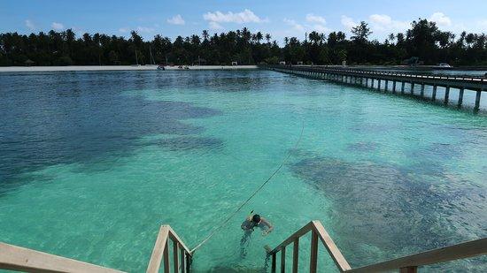 Kanifushi Island: Snorkelling at the hotels pier/Jetty