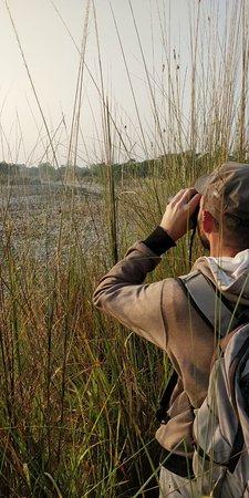 Bilde fra Bardia National Park