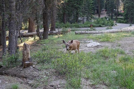 DORST CAMPGROUND - Updated 2019 Reviews (Sequoia and Kings Canyon