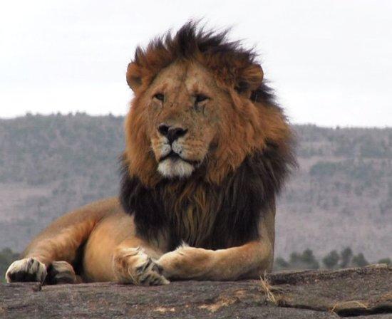 Natural Track Safaris
