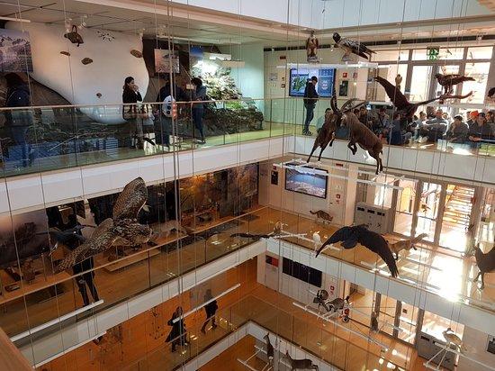 MUSE - Museo delle Scienze Photo