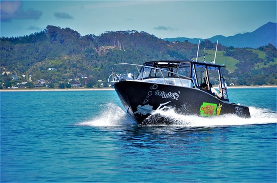 Whitianga, New Zealand: Mystery Machine - purpose built dive boat ready to head to some of our many of stunning dive sit