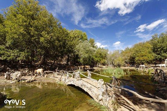 Siete mai stati in questo luogo quasi fiabesco?  Si chiama Is Tostoinus e si trova in territorio di Gairo. Location Perfetta per i vostri trekking in Ogliastra.