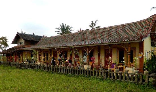 Rice Padi Artha
