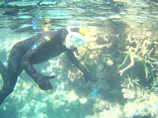 Great Barrier Reef, Australia: CAIRNS BARRIERA CORALLINA AUSTRALIANA