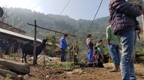 Nagarkot Panoramic Hiking Trail-billede