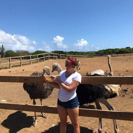 Curacao Ostrich Farm - 2019 All You Need to Know BEFORE You