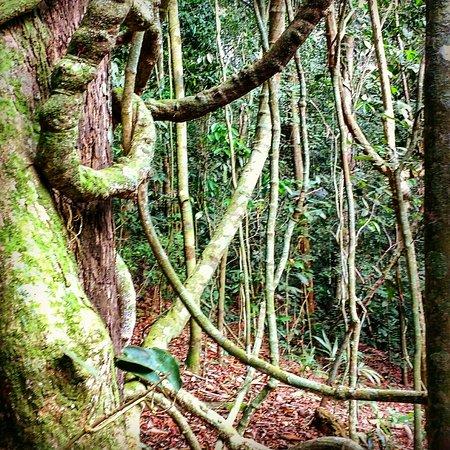 Uana Ete Jardim Ecologico Photo