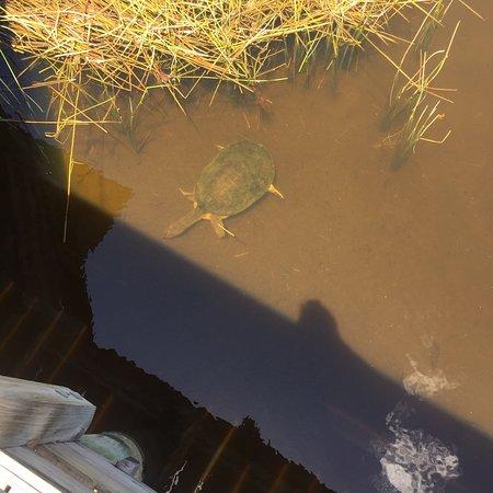 Фотография Wakodahatchee Wetlands
