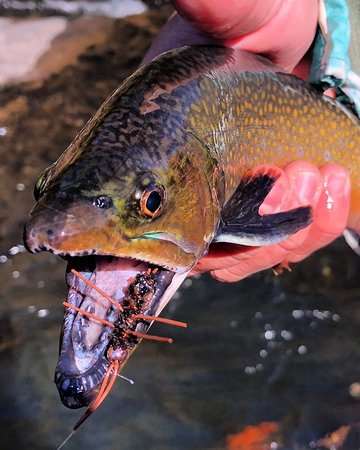Fly Fishing the Smokies (Bryson City) - 2019 All You Need to