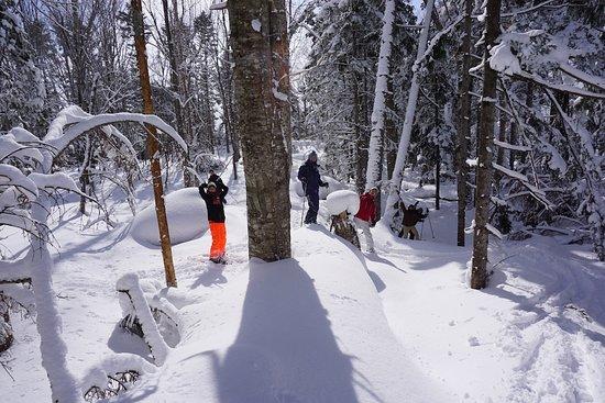 Kutchan-cho, اليابان: snowy-forest
