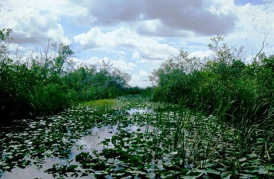 Florida Everglades: Non sembrano invitare a tuffarsi...