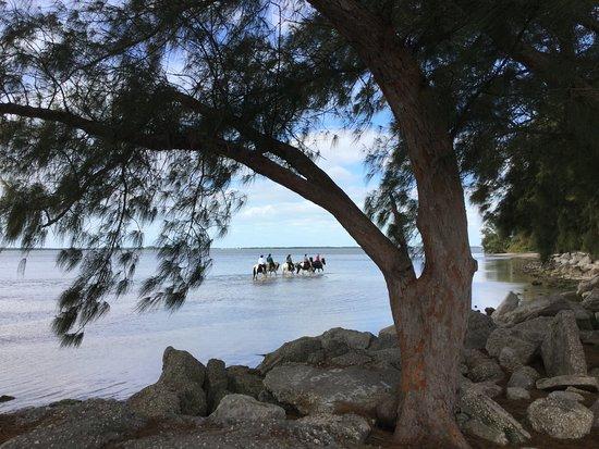 Florida, un angolo di costa a nord di Neaples Marzo 2016