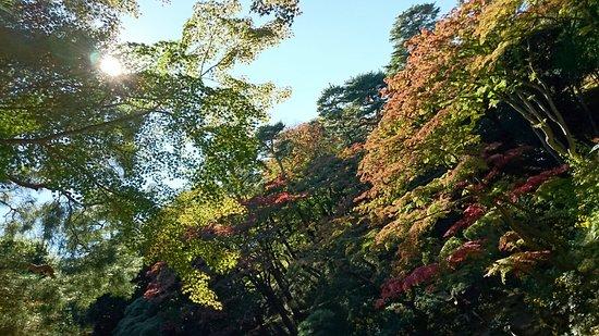 Tonogayato Garden