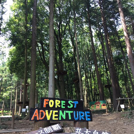 Forest Adventure Ohira