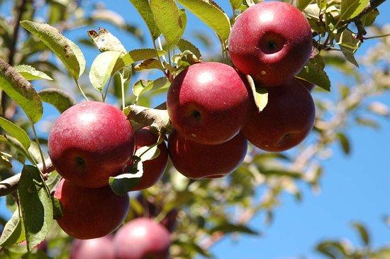 A & M Farm Orchard