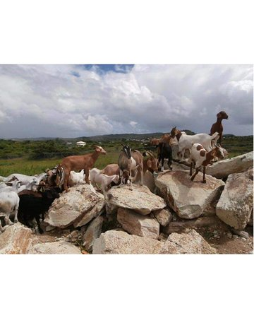 Saint Paul Parish, Antigua: getlstd_property_photo