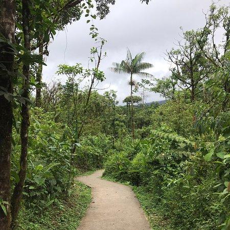 Tenorio Volcano National Park Foto