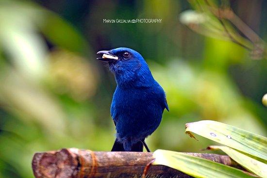 Baja Verapaz Department, Guatemala: Bellas aves que podemos observar en el departamento de Baja Verapaz, ven y disfruta de nuestros birdwatching tours!