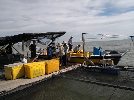 Kukup, Malaysia: Have a nice experience to go on board the kelong which is a floating farm for fisherman to rear fishes and then sell it to the market.