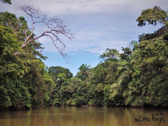 Cano Negro, Costa Rica: getlstd_property_photo