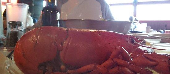Hubbards, Kanada: The small lobster...